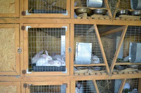 Клетки для кроликов своими руками: чертежи, размеры