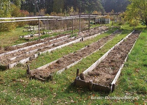 Правильная посадка гороха весной в открытый грунт:сроки, схемы, подготовка