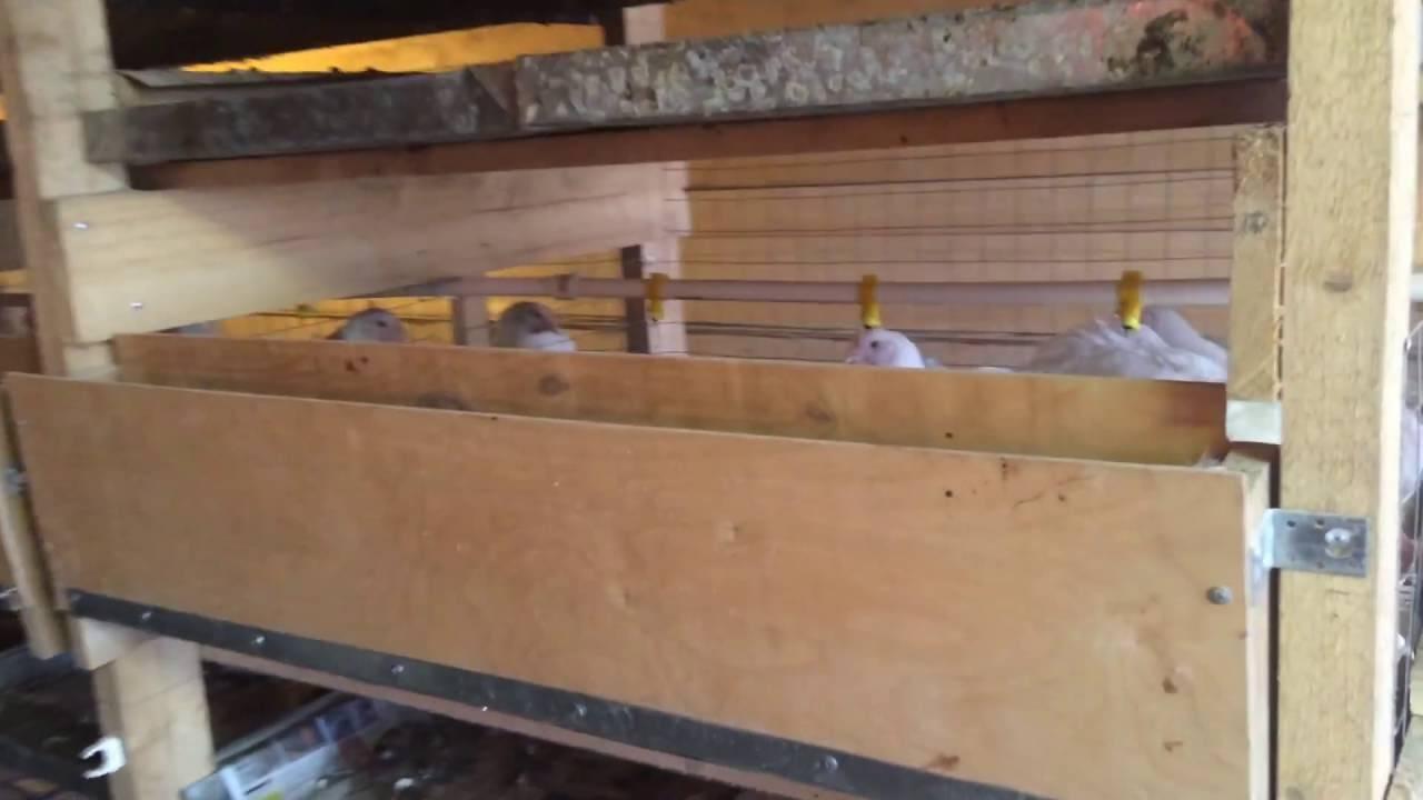 Строительство курятника для бройлеров своими руками