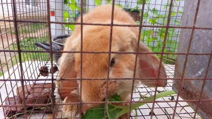 Корм для кроликов: состав, приготовление своими руками, особенности кормления