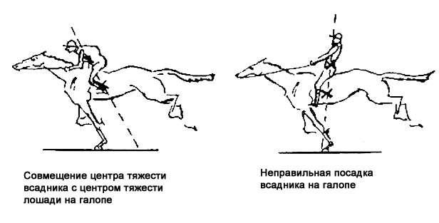 5 веских причин заняться верховой ездой :: как правильно :: «живи!»