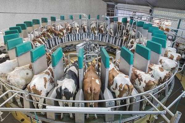 О доильном аппарате (технология доения коров в домашних условиях)