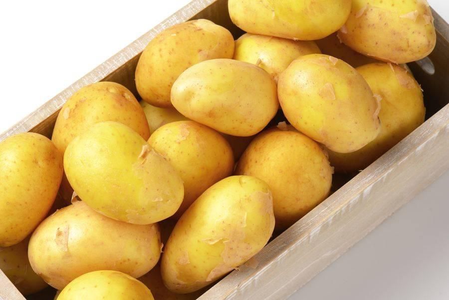 Характеристики картофеля «скарб», отзывы