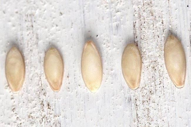 Способы подготовки семян перед посевом
