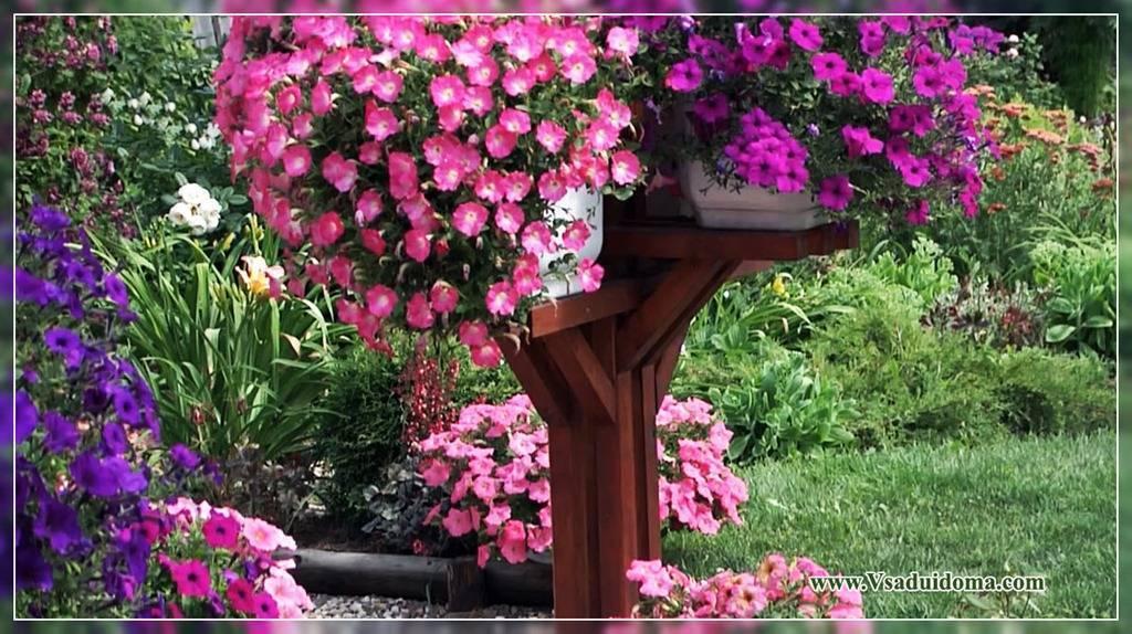 Ампельная петуния — выращивание в подвесных кашпо