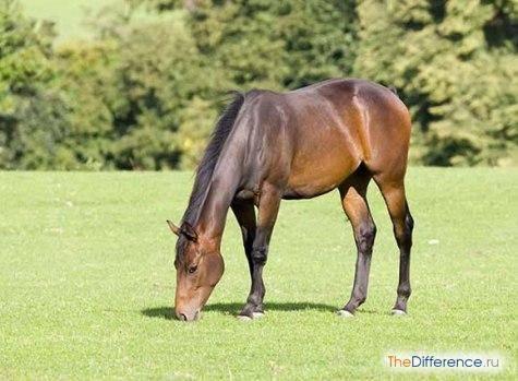 Содержание лошадей — основные виды содержания, характеристики и особенности питания и ухода