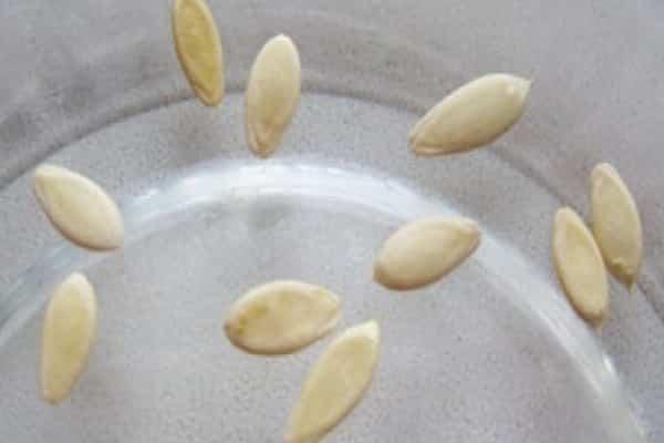 Как замочить семена огурцов