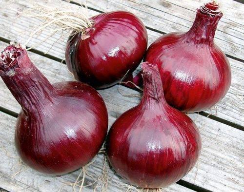 Красный лук: выращивание красного лука, сорта красного лука