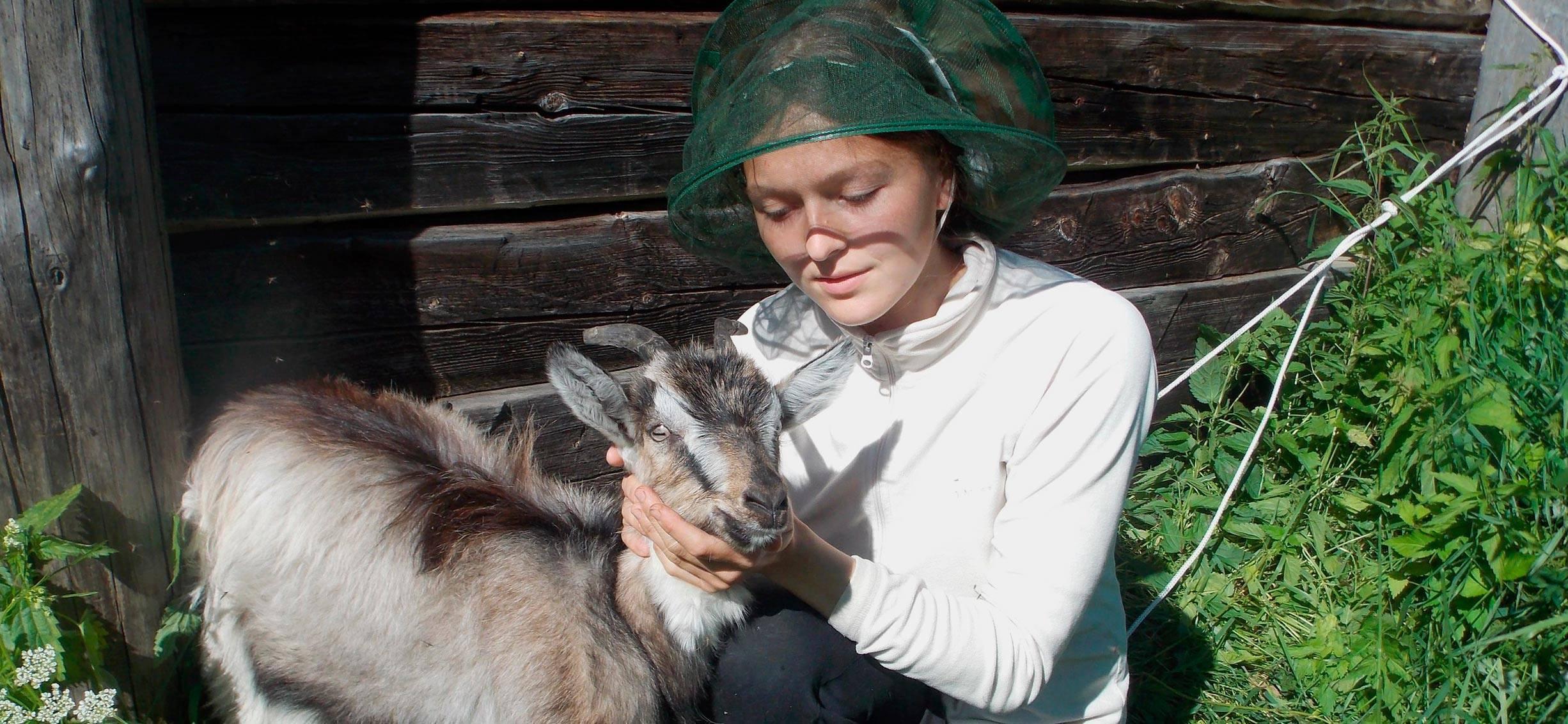 Содержание коз: способы разведения в домашних условиях. рентабельность разведения коз, подбор корма и особенности ухода (100 фото)
