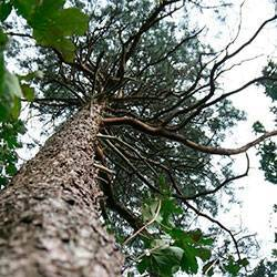 Чем полить дерево, чтобы оно быстро засохло: действенные методы и полезные советы
