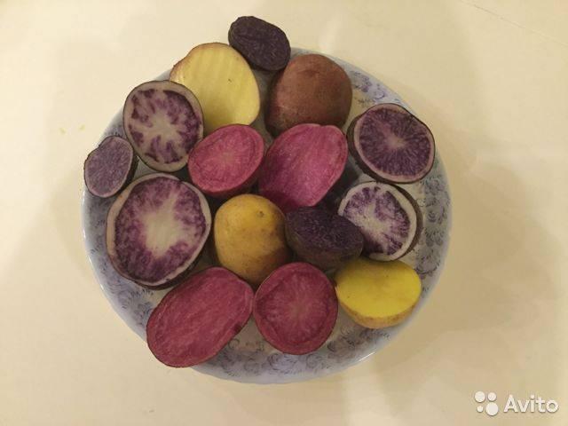 Сорт картофеля киви