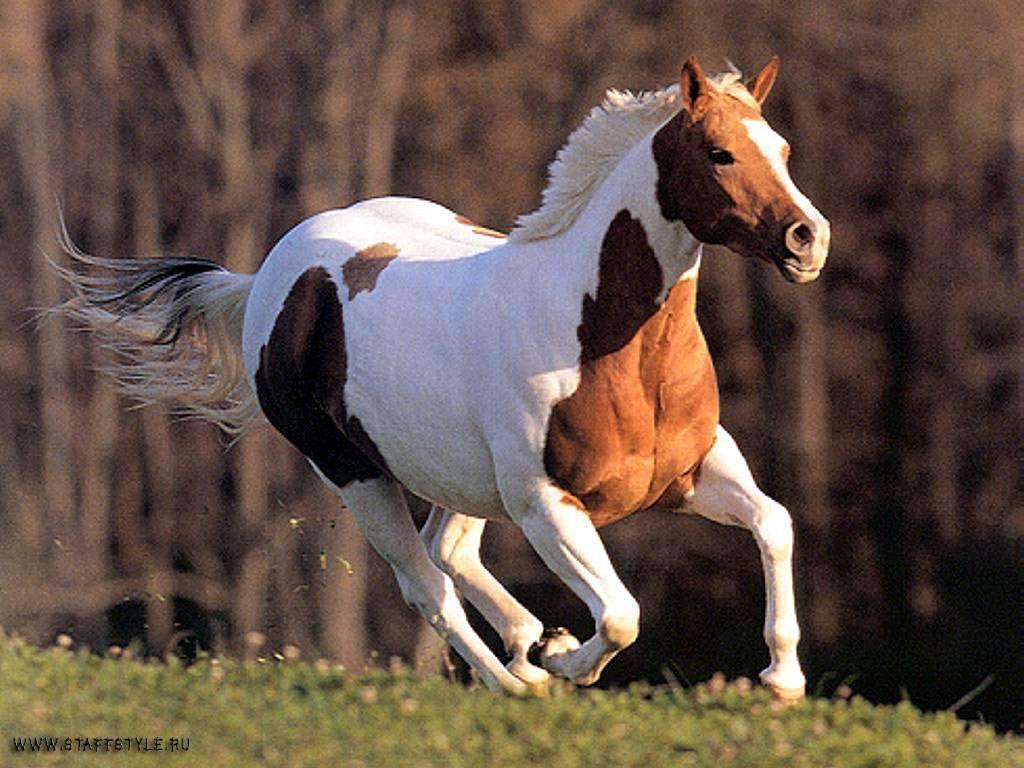 Лошадь – верный спутник человека