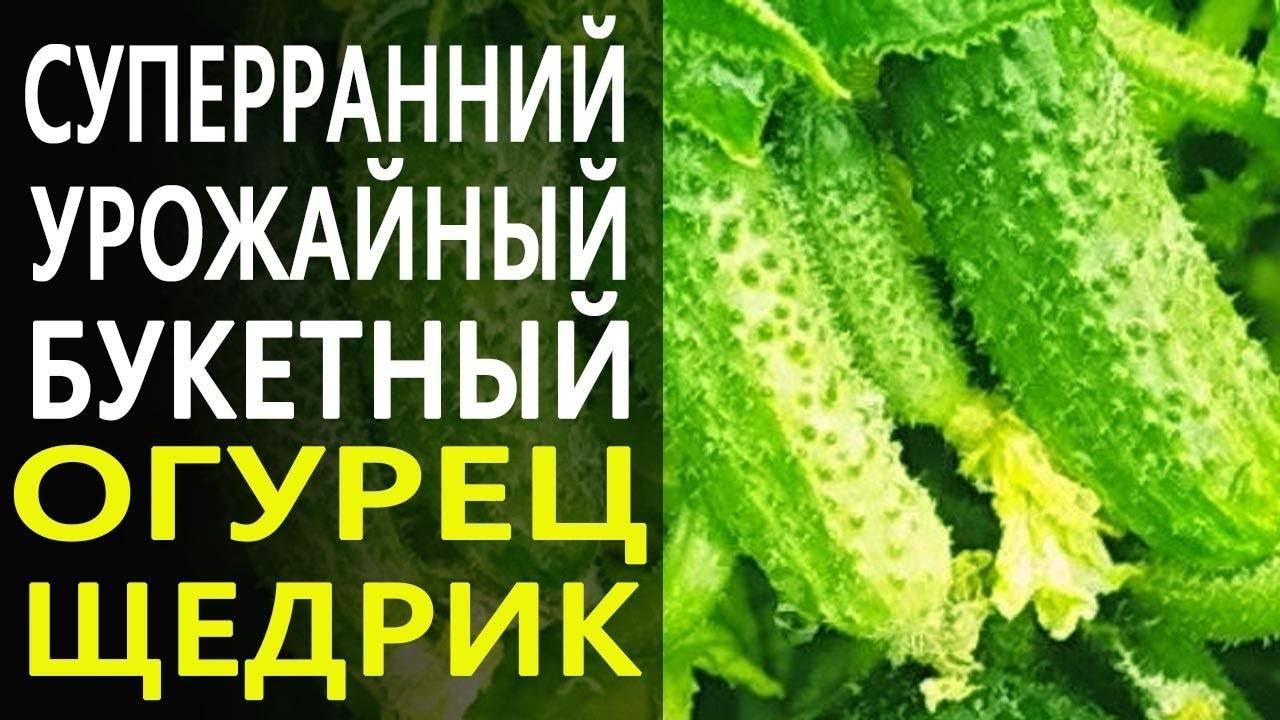 Огурец кураж f1: описание сорта, фото, отзывы, урожайность, выращивание в теплице и открытом грунте