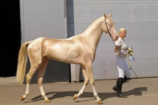 Топ-8 самых больших пород лошадей