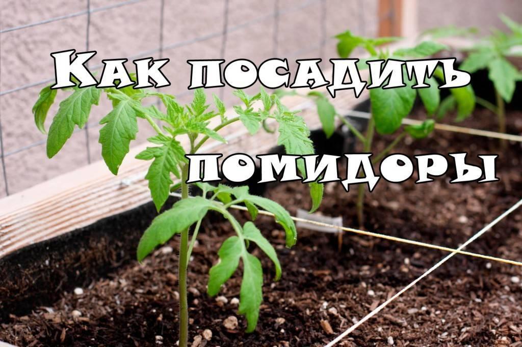 Как правильно посадить рассаду в теплице из поликарбоната