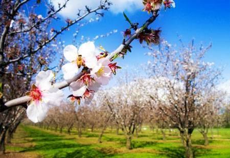 Весенняя обработка плодового сада от вредителей
