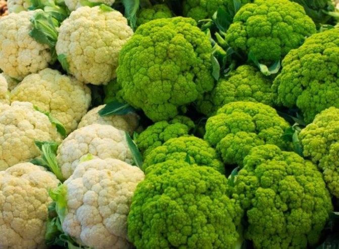 Выращивание цветной капусты: основная агротехника