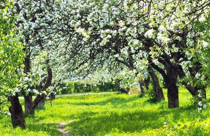 Удобрение для плодовых деревьев и кустарников весной при посадке