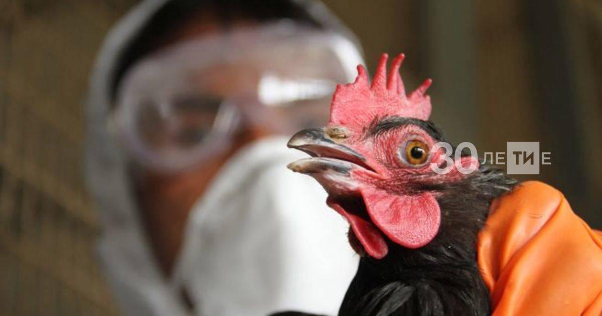 Симптомы птичьего гриппа у кур. признаки куриного гриппа