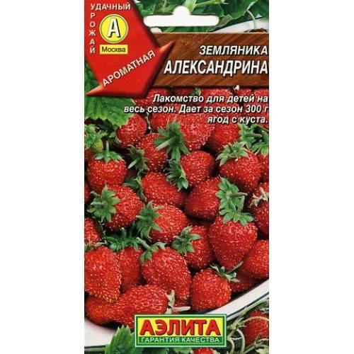 «александрия» — мелкоплодная ремонтантная безусая земляника для выращивания в открытом грунте