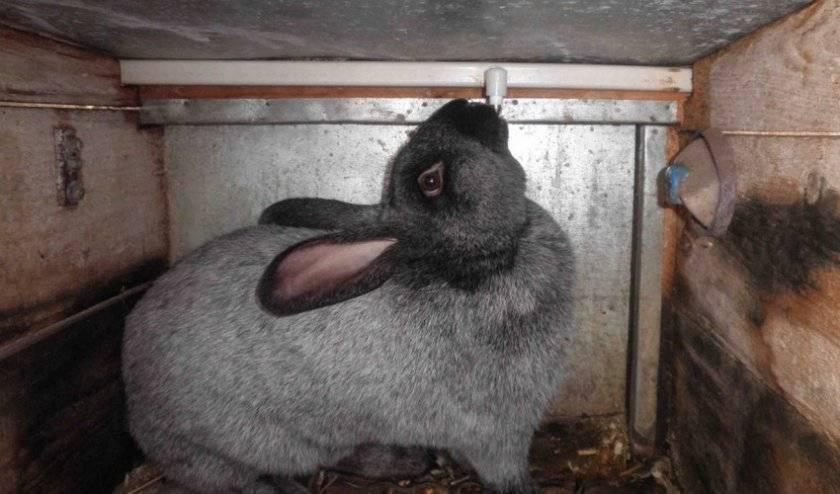 Как сделать клетку для содержания кроликов своими руками в домашних условиях