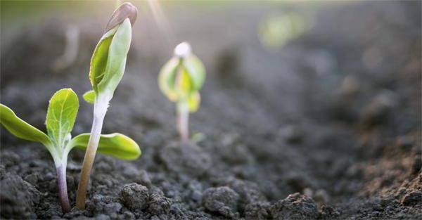 Вегетация растений: что это такое, когда наступает и сколько длится этот период