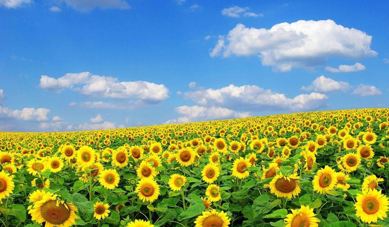 Сезонная аллергия на цветение, когда начнется? - запись пользователя ксюня (ksanchik) в сообществе детские болезни от года до трех в категории аллергия - babyblog.ru