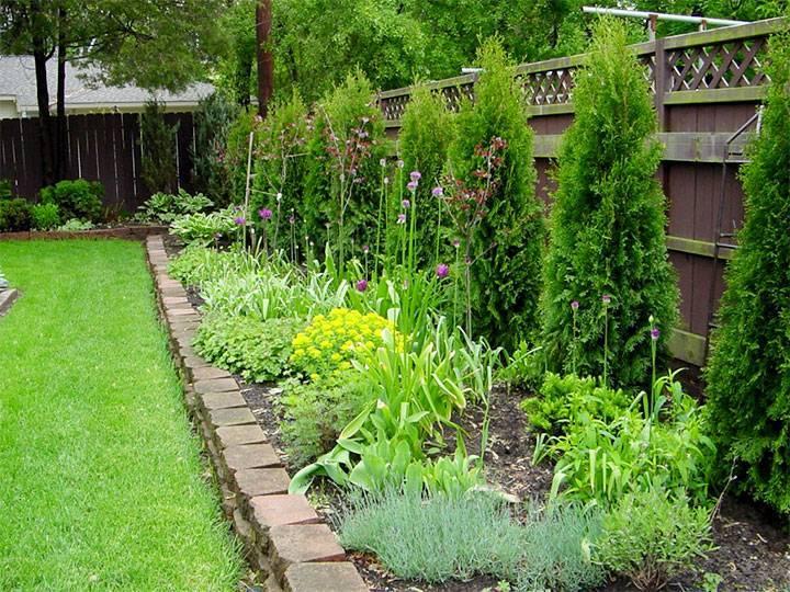 Что садить в тени забора, за домом, на даче: какие культуры овощей и кустарников теневыносливые