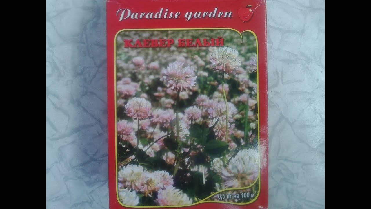 Виды и сорта цветка клевера: фото лугового, красного, четырехлистного, ползучего, розового и зеленого с описанием
