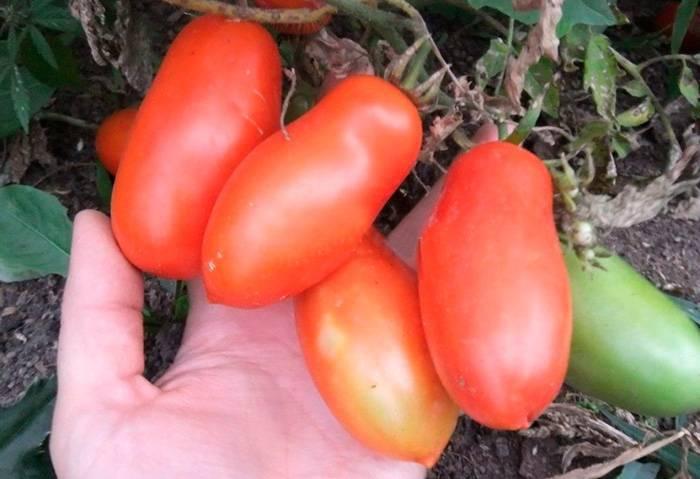 Как приготовить суп из томатов гаспачо