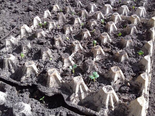 Хотите узнать, как выращивать редиску в домашних условиях? читайте статью – в ней все об этом!