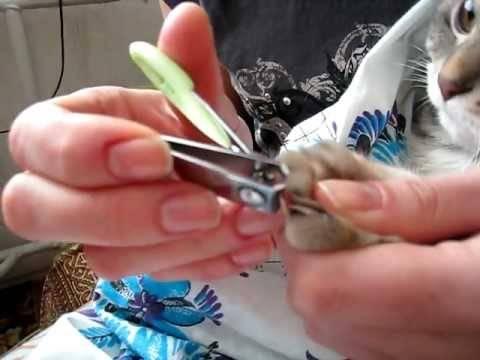 Учимся правильно стричь декоративному кролику когти!