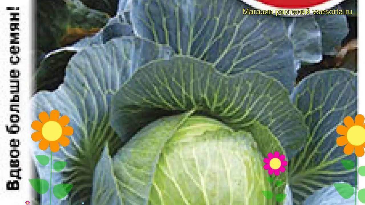 Капуста ранняя: лучшие сорта - лучший обзор + инструкция по выращиванию!
