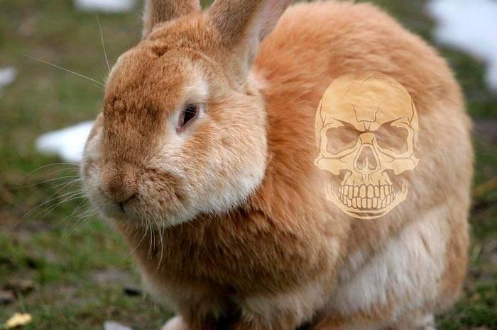 От чего дохнут кролики осенью. почему дохнут кролики и что делать? что такое падеж кроликов