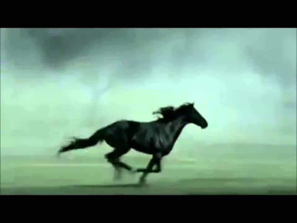 Аллюры — это походки лошадей. виды