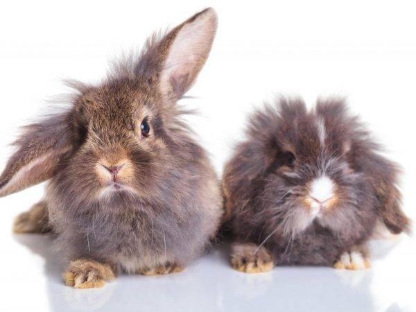Как можно определить пол кролика: отличия самца от самки