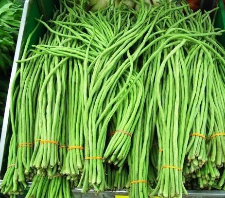 Спаржевая фасоль: выращивание и уход в открытом грунте