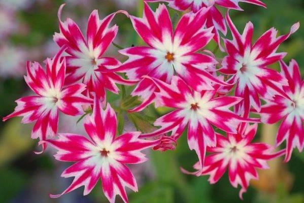 Выбираем однолетние цветы для дачи