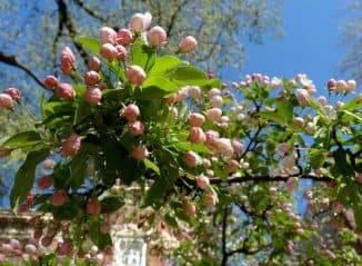Вегетация растений — важный биологический признак культуры