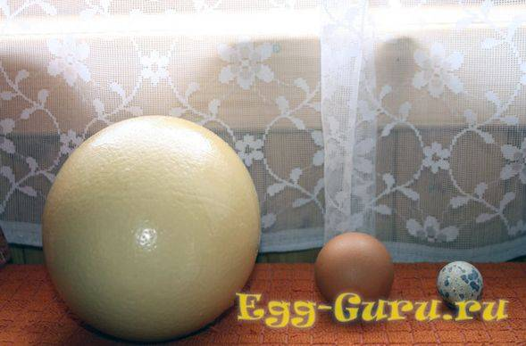 Как употреблять страусиные яйца: рецепты и полезные свойства