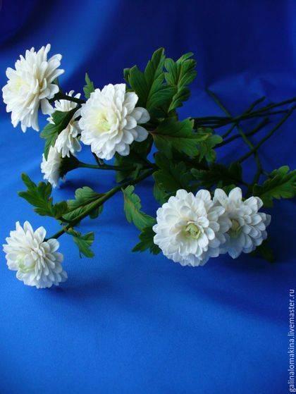 Многолетние садовые хризантемы: сорта, посадка и уход