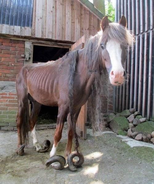 Копыта лошади, уход за ними и ковка