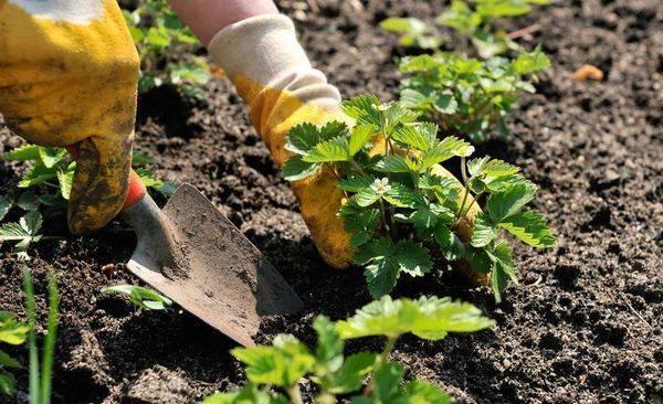 Как защитить рассаду от возвратных заморозков
