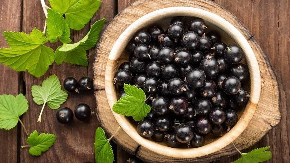 Черная смородина: полезные свойства и противопоказания