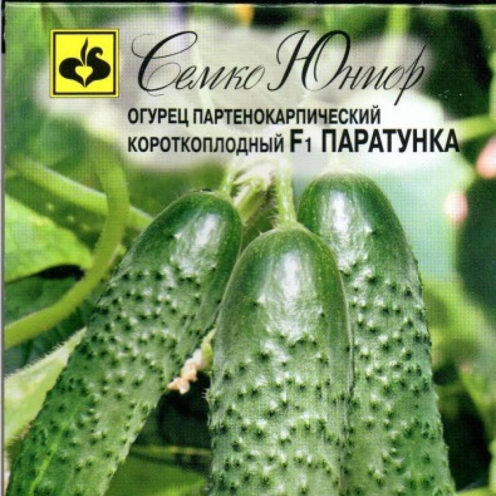Сорт огурцов паратунка f1: описание и характеристика, отзывы