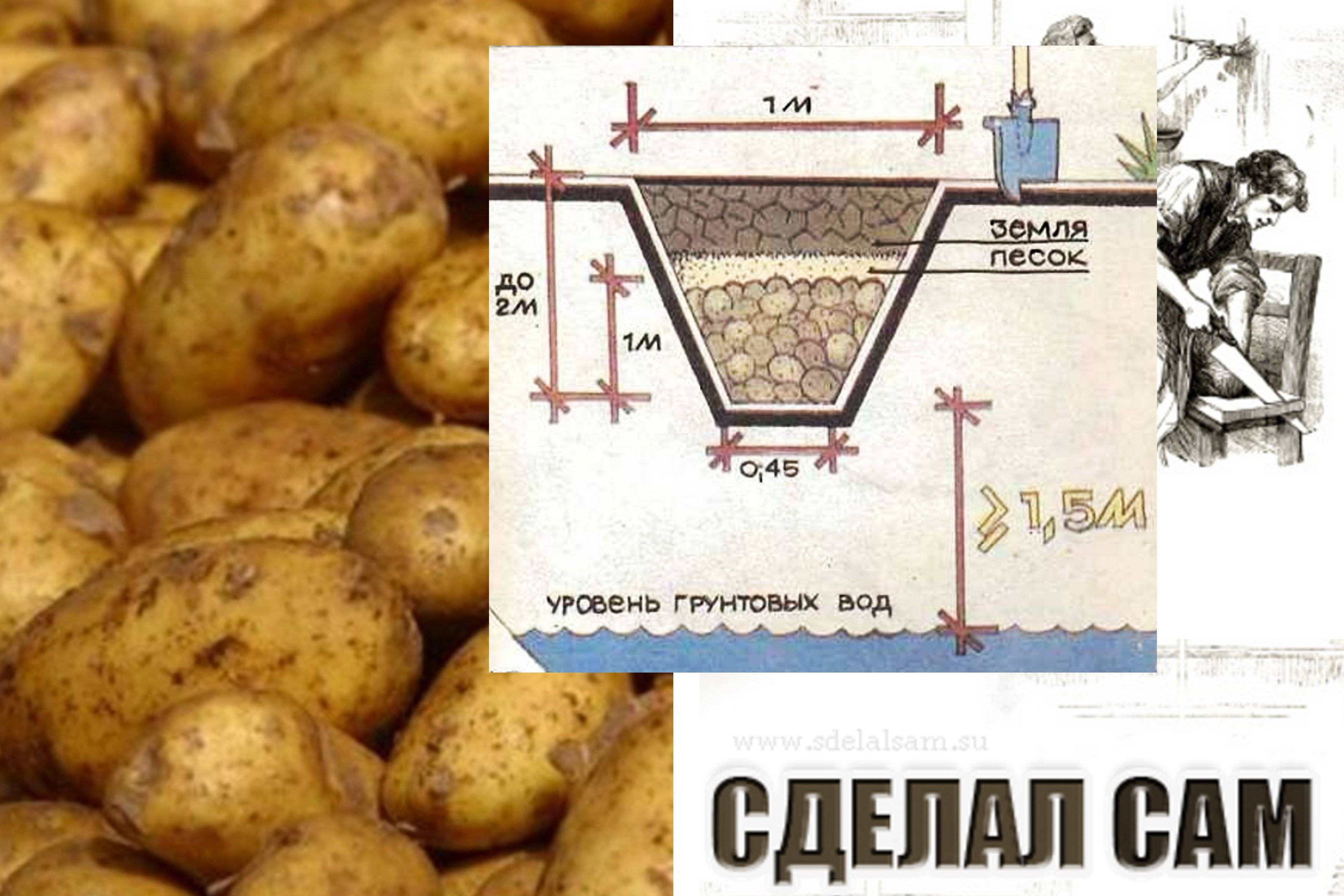 Как правильно хранить картофель в доме или квартире