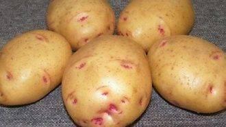 Сорта картофеля: характеристика видов, фото