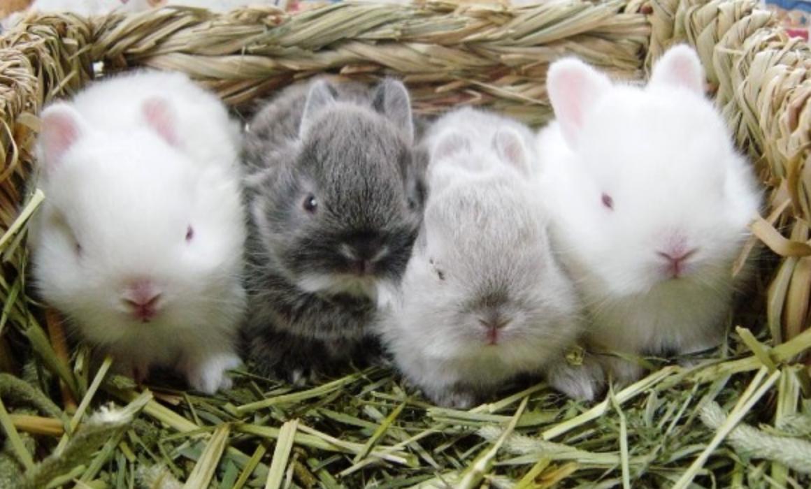 Кролики: разведение, выращивание, кормление - подробное руководство!