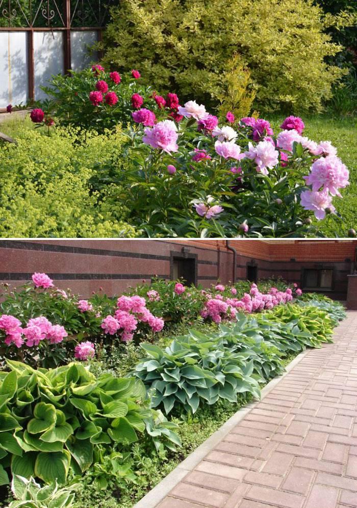 Клумба с флоксами: виды цветов и их сочетаемость с другими растениями