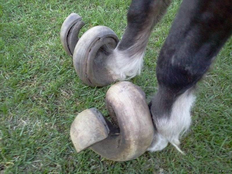 Уход за копытом лошади